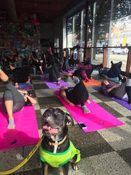 Foster dog visiting yoga class