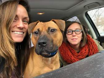 dogfighting rescue pit bull michigan