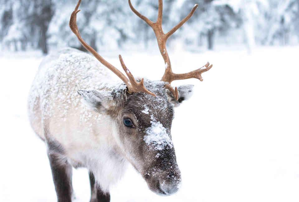 Santa's Reindeer Names: Every Reindeer, Ranked From Rudolph