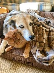 Dog and cat cuddling under blanket together