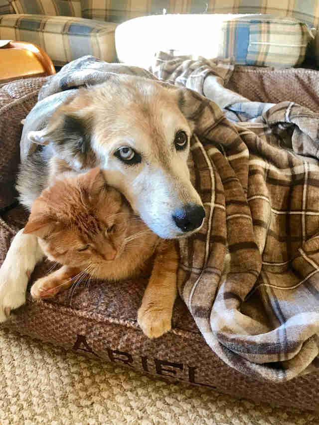 Dog and cat cuddling under blanket together