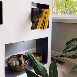 cat tree bookcase