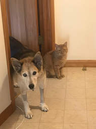 Dog and cat in doorway together