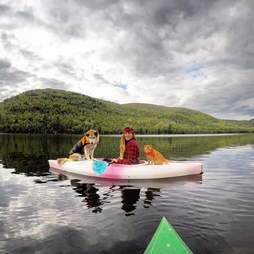 Dog and cat on kayak with young woman