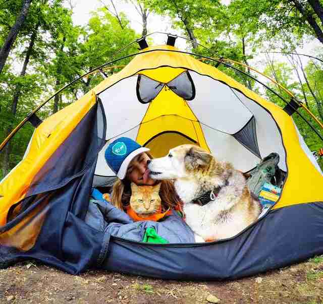 Woman sharing tent with dog and cat