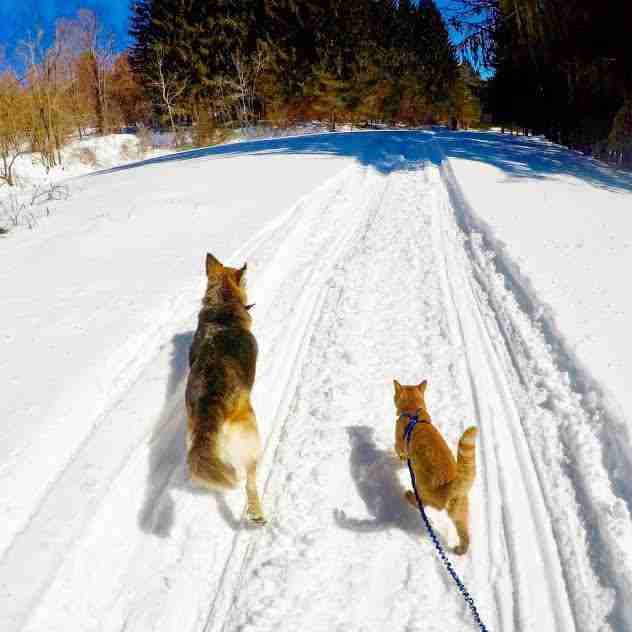 Dog and cat walking together in the snow
