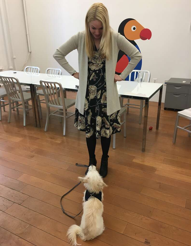 Terrier Darcy doing name training with owner