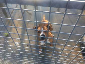 Shelter dog inside kennel