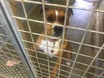 Shelter dog inside concrete kennel
