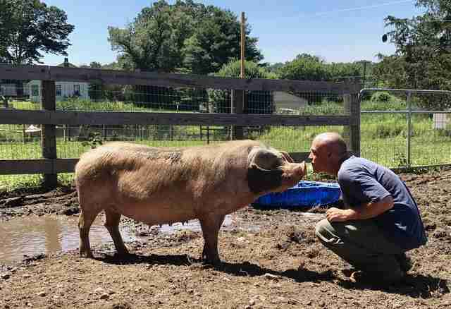 Man touching noses with pig in pen