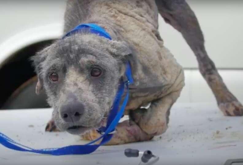 hairless dog rescue louisiana violet