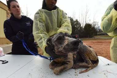 hairless rescue dog louisiana violet