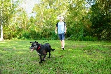 hairless dog rescue recovery louisiana violet