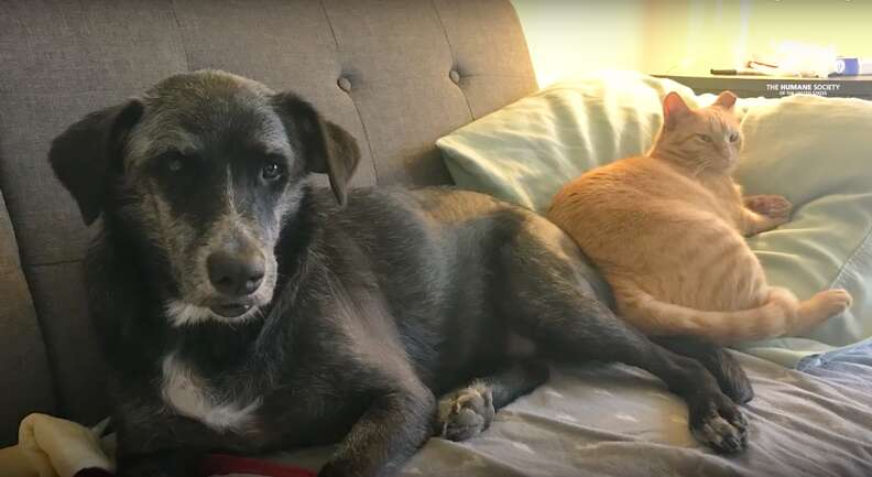 hairless dog rescue recovery adopted louisiana