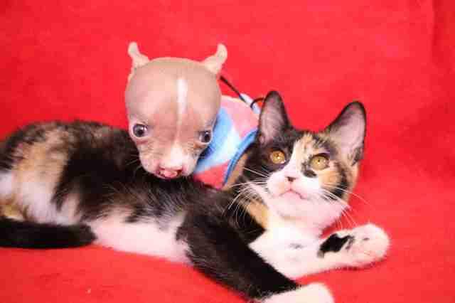 sasha groapă catelus și pisică