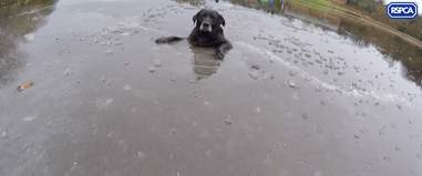 dog stuck in ice