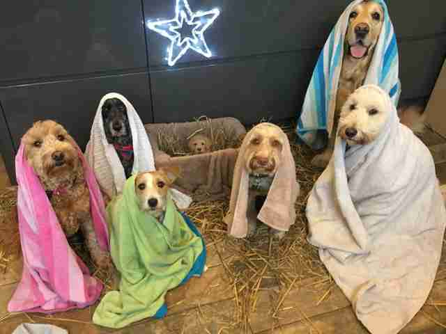 groomer stages perfect nativity scene with dogs the dodo