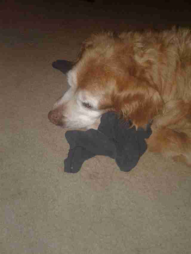 dog sleeps with dad's shirt every night
