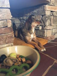 family makes dog a little cave