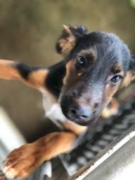 Puppy rescued from pig sty in Costa Rica