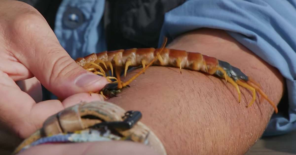 Coyote Peterson Takes A Bite From A Giant Desert Centipede Thrillist