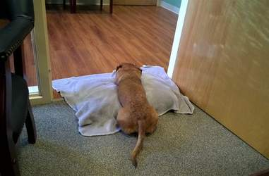 guy makes dog a bed in middle of office