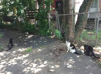 Stray cats on a shadowy street in Philadelphia