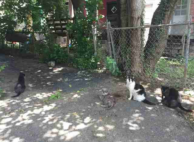 Stray cats on a shadowy street in Philadelphia