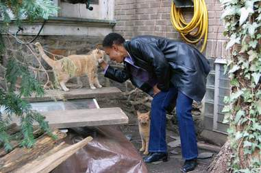 Woman petting stray orange cats