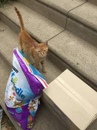 Stray cat standing in front of bag of cat food and box