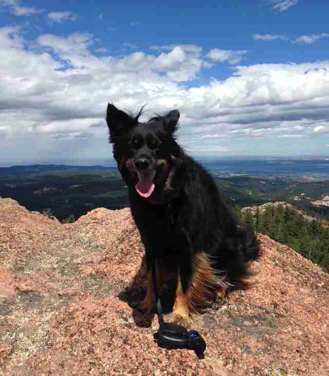 Sarge hiking in Colorado
