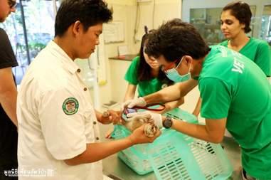 Wild slow loris found in Thailand man's shower