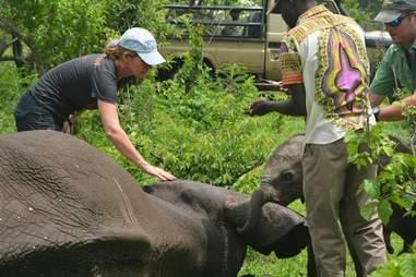 Baby elephant touching mom
