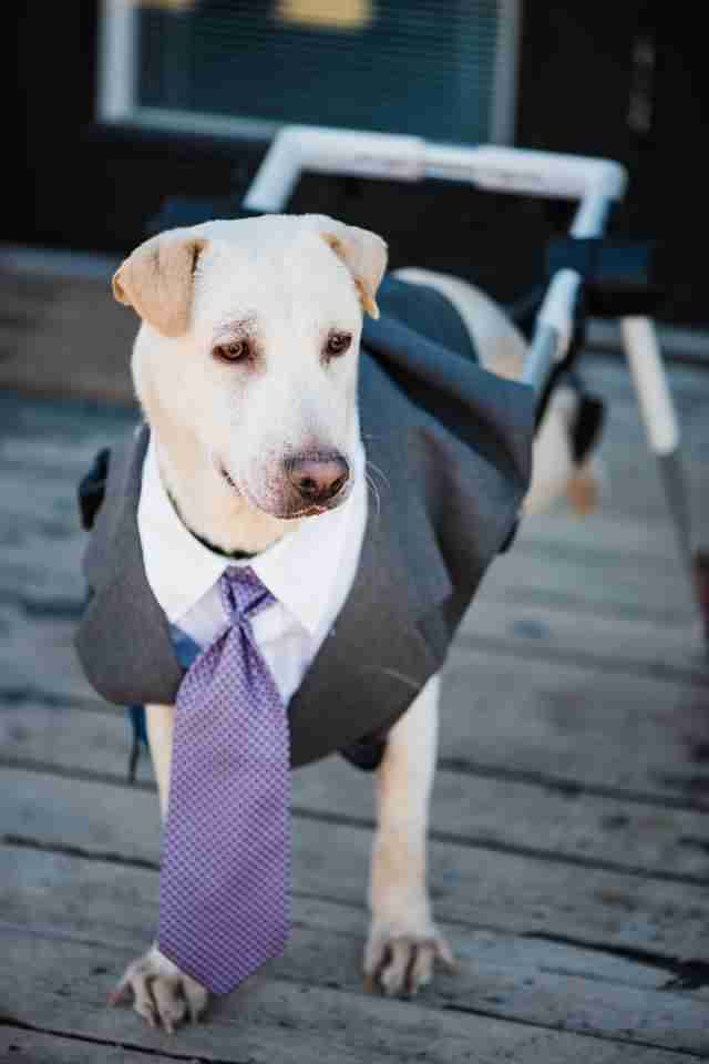 dog in tie at wedding