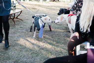 two dogs meeting at wedding