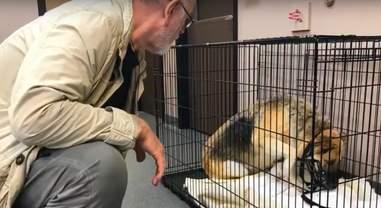 puppy mill rescue victoria