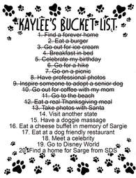 Senior rescue pit bull's bucket list