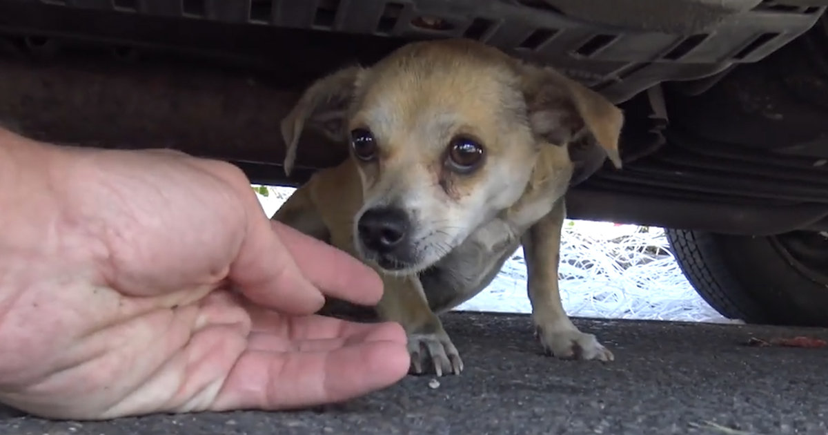 Rescue Dog Scared Of Traffic