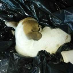 Puppy inside garbage bag