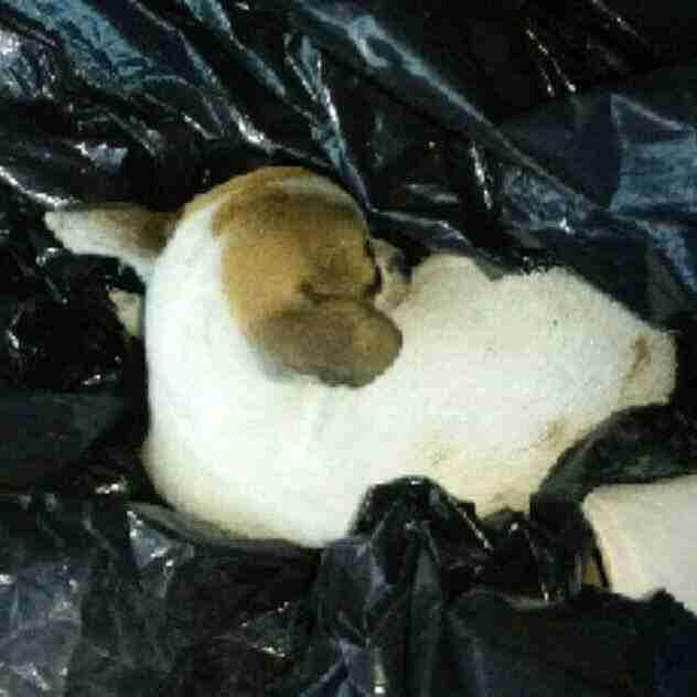Puppy inside garbage bag