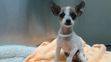 Small dog with collar around his neck