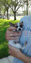 Person holding tiny rescued puppy