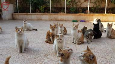 Cats at sanctuary in Syria