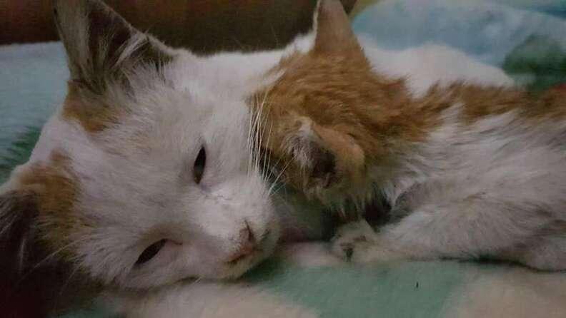 Kitten licking cat on her neck