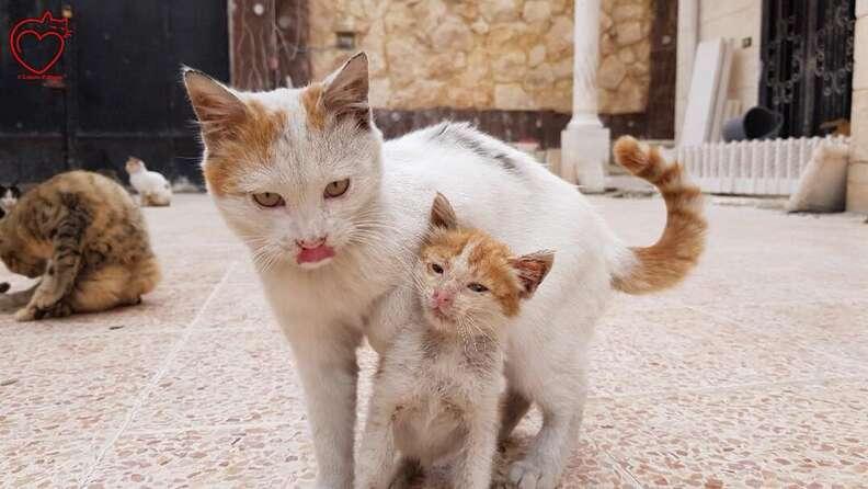 Older cat and kitten cuddled up together