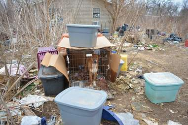 Dogs trapped in crates in Bates County, MO