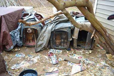 Dogs in crates on property in Bates County, Missouri