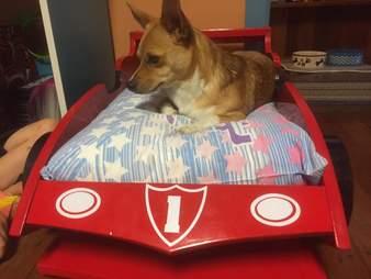 granddog grandpa custom bed