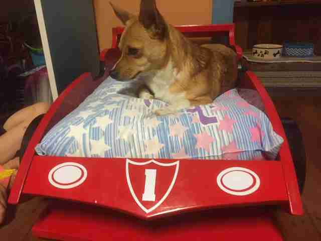 granddog grandpa custom bed