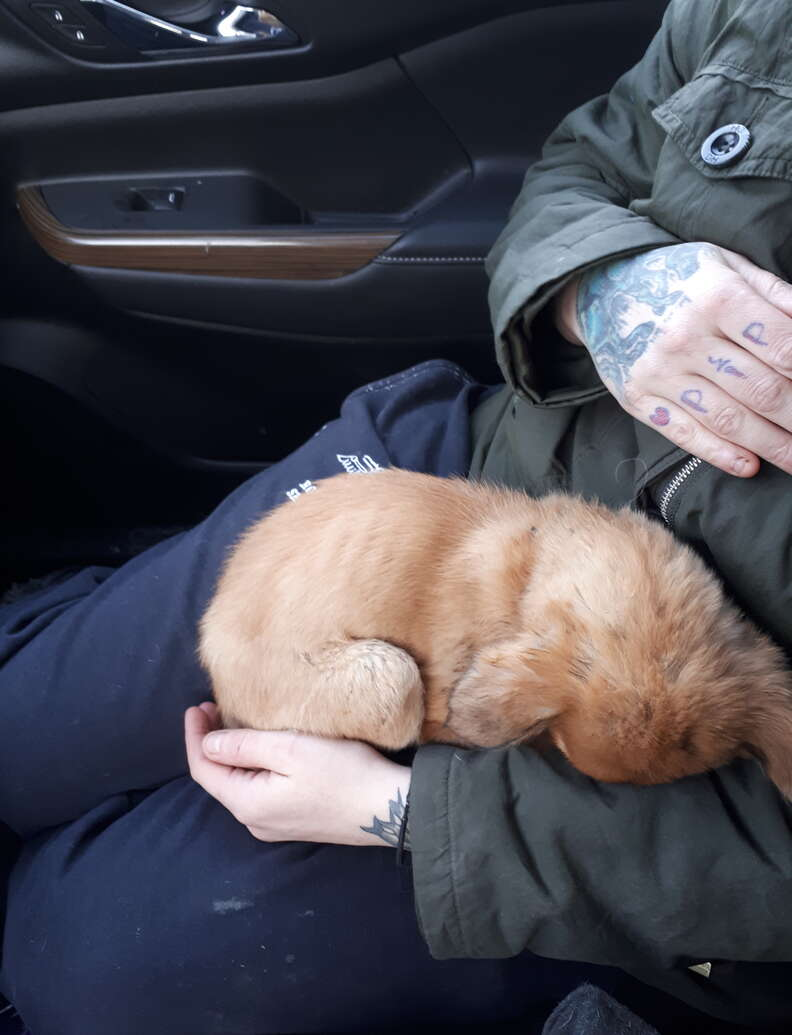 Puppy rescued from cold in Alberta, Canada